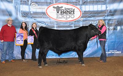 Angus Champ Bull 2017