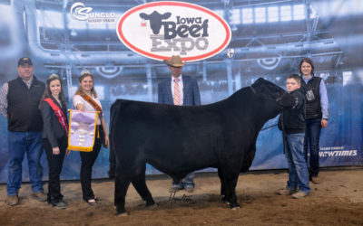 Angus res bull